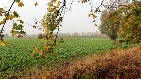 Season change in autumm with salad field Royalty Free Stock Image