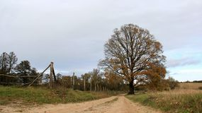 Dirt Road Countryside In Autumn. Season change autumn and dirt road rural areas on Usedom island Germany Royalty Free Stock Image