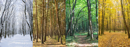 Season change in forest. Four season changes  in forest Royalty Free Stock Photography