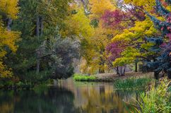 Season of Change Reflecting in the Silent Autumn Pond Stock Image