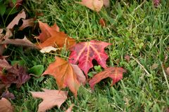 Leaves surrounding. Season change. Summer has end, Fall season just arrived. Leaves changing color. Brown, Red and Orange royalty free stock photography