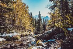 Season changing, first snow and autumn trees. Season changing, first snow and autumn aspen trees in  Rocky Mountain National Park, Colorado, USA Stock Photography