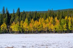 Season changing, first snow and autumn trees. In Colorado, USA Stock Photos