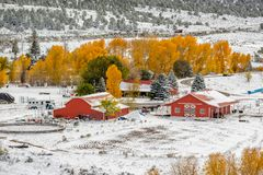 Season changing, first snow and autumn trees. Rocky Mountains, Colorado, USA Royalty Free Stock Photos