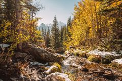 Season changing, first snow and autumn trees. Season changing, first snow and autumn aspen trees in  Rocky Mountain National Park, Colorado, USA Royalty Free Stock Photos