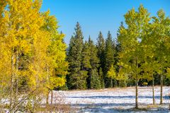 Season changing, first snow and autumn trees. In Colorado, USA Stock Photo