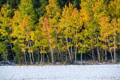 Season changing, first snow and autumn trees. In Colorado, USA Royalty Free Stock Images