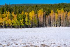 Season changing, first snow and autumn trees. In Colorado, USA Stock Photography
