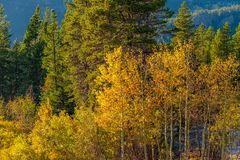 Season changing, first snow and autumn trees. In Colorado, USA Royalty Free Stock Photography