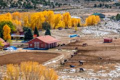Season changing, first snow and autumn trees. Rocky Mountains, Colorado, USA Stock Photography