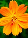 Season flower Royalty Free Stock Image