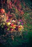Season garden basket fruit gifts autumn royalty free stock images