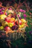 Season garden basket fruit gifts autumn stock photos