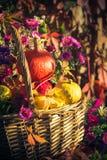 Season garden basket fruit gifts autumn royalty free stock photography