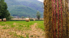 Season grass collection. Haystacks on the background of mountains Stock Photography