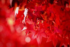 Season greetings Stock Photo
