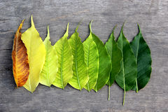 Season leaves Royalty Free Stock Images