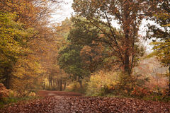 Season of Mists & Mellow Fruitfulness Royalty Free Stock Images