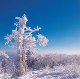 Season. Nature Royalty Free Stock Photography