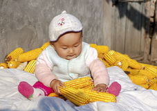 The season of result plays the baby of corn. Harvest a seasonal changes to sit the baby who plays on the heap in the corn in autumn Royalty Free Stock Image