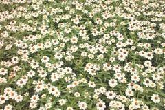 Season. Spring Royalty Free Stock Photo