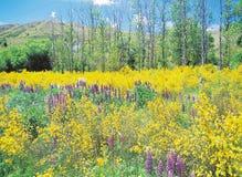 Season. Spring Stock Photography