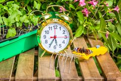 Season spring planting flower seedlings in the garden. Container with the seedlings of morning glory flowers, alarm clock, tortoise butterfly,mini-ripper on a Royalty Free Stock Images