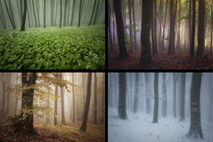 Season spring summer autumn winter in the forest with fog Royalty Free Stock Photo