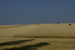 Season of summer harvesting of cereal cultures Stock Image