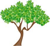 Season, Summer, Tree, Leaves, Green Royalty Free Stock Images