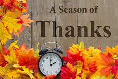 A Season of Thanks. Autumn Leaves and Alarm Clock with grunge wood with text royalty free stock images