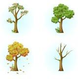 4_Season träd, höst, vinter, snö, trädblomningar, vår, lövfällande träd Arkivbilder