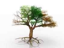 The season tree Royalty Free Stock Photos