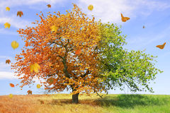Season tree. With falling leafs and butterflies Royalty Free Stock Images