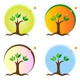 Season tree Royalty Free Stock Image