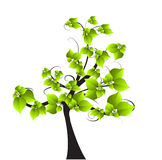 Season tree with green leaves Stock Photography