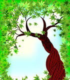 Season tree with green leaves. On the sky Stock Images