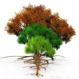 Season trees Royalty Free Stock Images