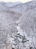 Season. Winter Royalty Free Stock Photo