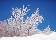 Season. Winter Royalty Free Stock Images