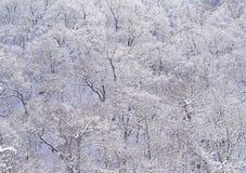Season. Winter Royalty Free Stock Photos