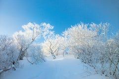 Season. Winter Stock Photos