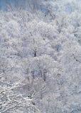 Season. Winter Stock Photo