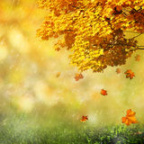 Seasonal abstract backgrounds Stock Photography