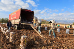 Seasonal agricultural workers Royalty Free Stock Photos