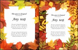 Seasonal autumn background of colorful leaves. Stock Photos