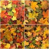 Seasonal autumn background of colorful leaves. Stock Photo