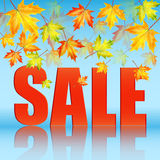 Seasonal autumn sale. Announcement of sale of the autumn on a background of yellow maple leaves.seasonal autumn sale Royalty Free Stock Images