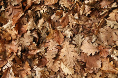 Seasonal background. Autumn leaves on the ground royalty free stock photography