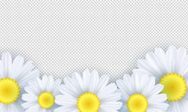 Seasonal background. Chamomile flowers on a transparent background. Template for your design. Vector illustration. EPS 10 Stock Photos
